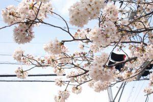 武蔵小杉周辺のお花見スポット