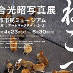 4/23(土)〜6/30(日)岩合光昭写真展 ねこづくし