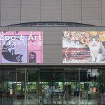 川崎市市民ミュージアム 岩合光昭写真展「ねこづくし」に行ってきた!